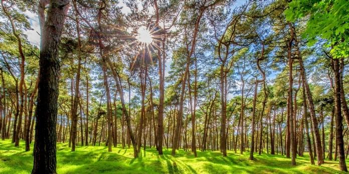 Poujouat rachète Bois Bûche Centre Atlantique (BBCA)